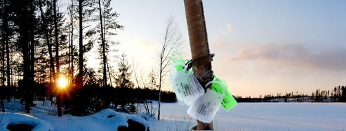 разрешение для ловли рыбы в финляндии
